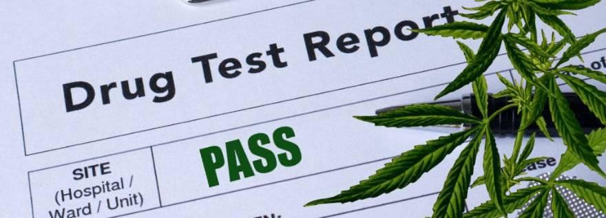 CBD Drug Test : Does CBD Show Up On a Drug Test , CBD Oil And Drug Testing